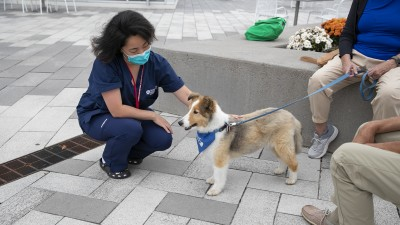 Health Sciences student during a therapy dog event